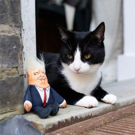 Präsidenten Katzenspielzeug