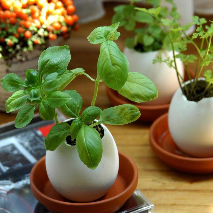 Eggling - Kräuter-Eier - basil
