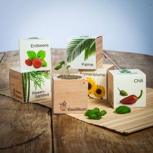 ecocube - Pflanzen im Holzwürfel