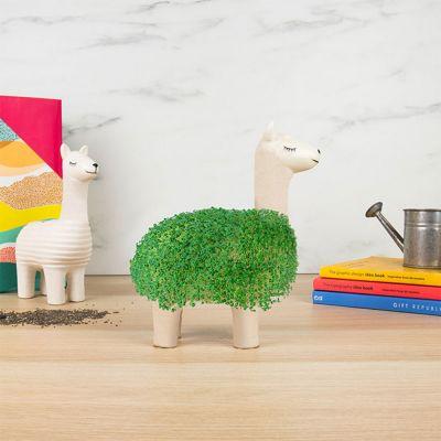 Das grüne Lama
