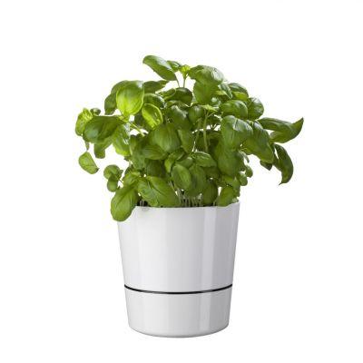 Geburtstagsgeschenke für Frauen - Herb Hydro Pot Blumentöpfe