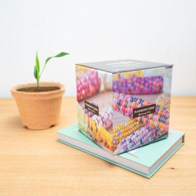 Top-Seller - Regenbogen-Maiskolben Aufzuchtset