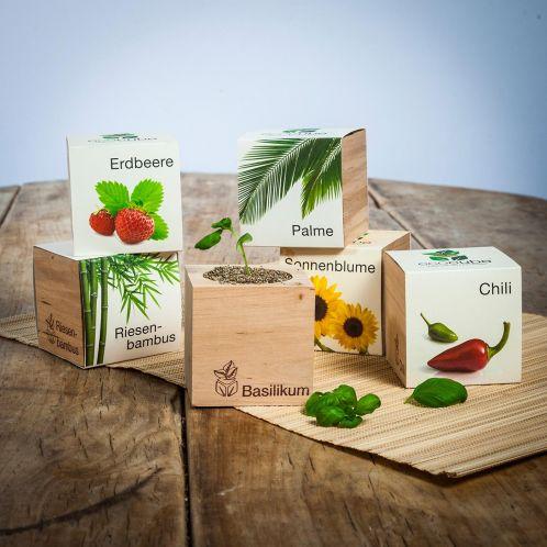 Geschenkideen - ecocube - Pflanzen im Holzwürfel